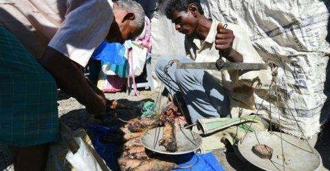 চাহিদার শীর্ষে ইঁদুরের মাংস, কেজি ২০০ রুপি!