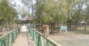 ঘুরে আসুন কলাগাছিয়া ইকোট্যুরিজম কেন্দ্র